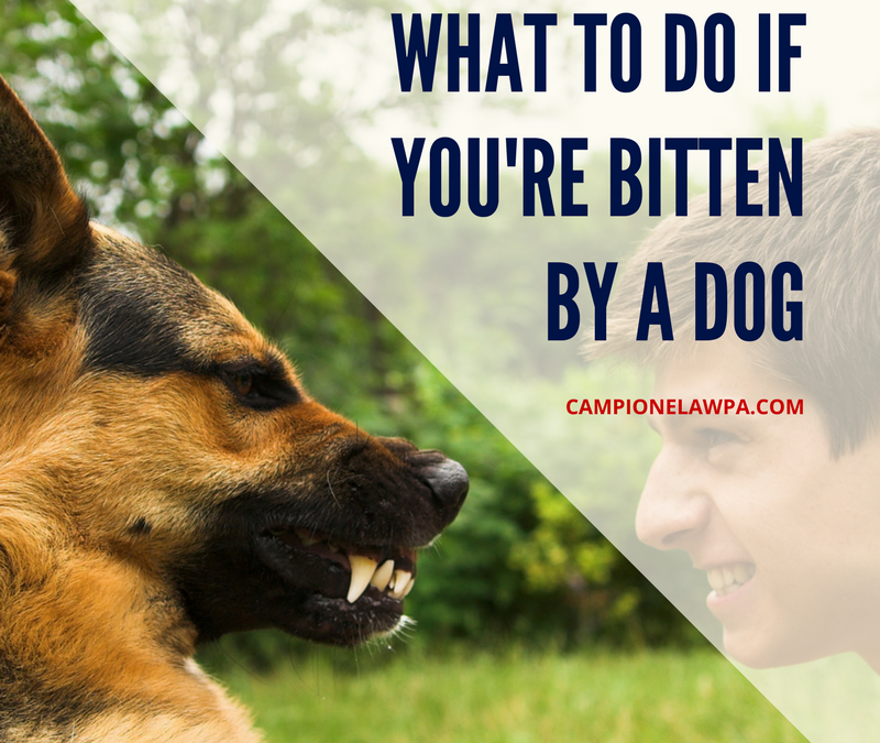 What To Do If You Re Bitten By A Dog Dog Attack Attorney
